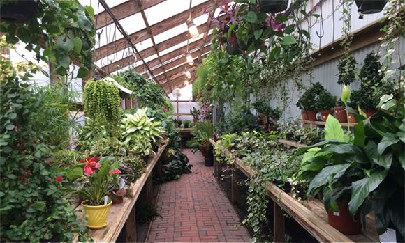 Greenhouse Gardening Architecture