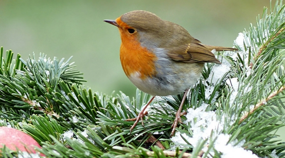 Morrisons Home and Garden | Agway | Field-notes | Fall & Winter Birds